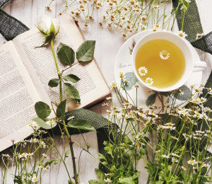 Chamomile Plant Based Skin Care
